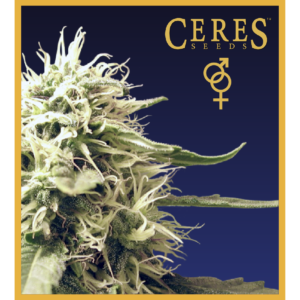 Ceres Kush - Regular seeds, Ceres Skunk - Regular seeds, Fruity Thai - Regular seeds, Lemonesia - Regular seeds, White Indica - Regular seeds,Hollands hope, Orange bud, Purple, Skunk Haze, White widow