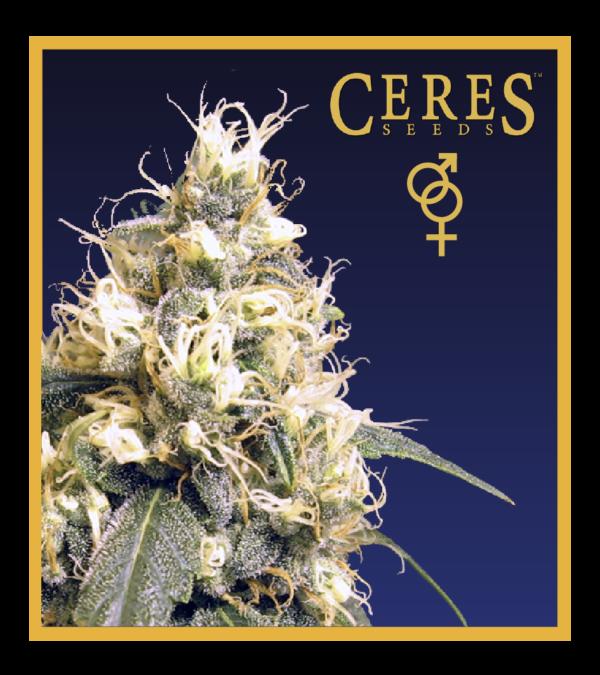 Ceres Skunk - regular seeds