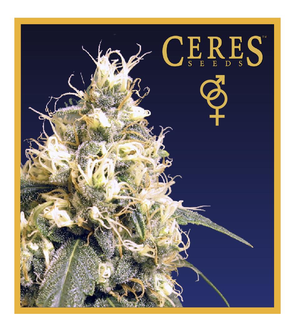 Ceres Skunk - Regular Cannabis Seeds