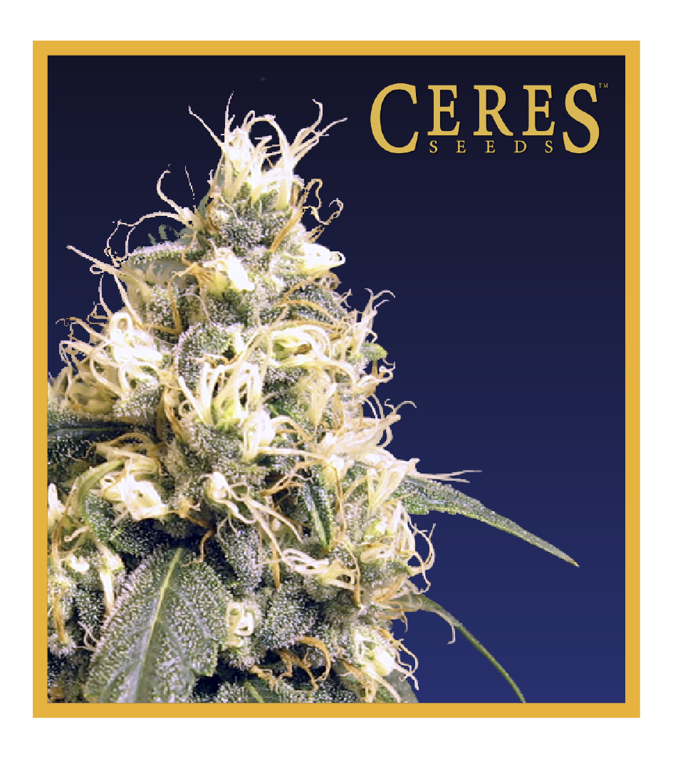 Ceres Skunk - Cannabis Seeds - Ceres Seeds Amsterdam