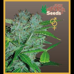 Amsterdam - Regular Cannabis Seeds - John Sinclair Seeds