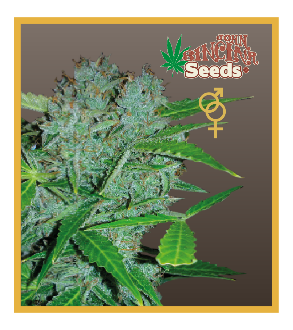 Amsterdam - feminized seeds, Fruity Thai, Trans love energies - feminized seeds, Viper- Regular seeds, White Panther - feminized seeds, Zenta - Regular seeds, Auto-flowering seeds mix, Auto-lemonesia, Easy rider,