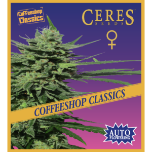 White panther - Regular seeds, Fruity Thai, Northern Lights - Regular seeds, Ceres regular seeds mix - Regular seeds, Hollands hope, Orange bud, Purple, Skunk Haze, White widow