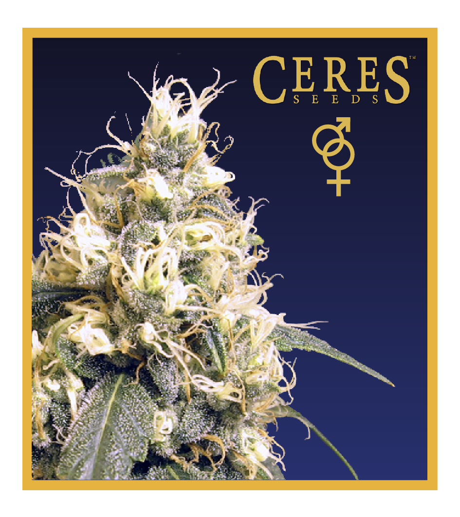 White panther - Regular seeds, Fruity Thai, Northern Lights - Regular seeds, Ceres regular seeds mix - Regular seeds,Hollands hope, Orange bud, Purple, Skunk Haze, White widow