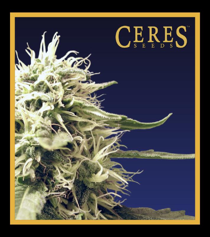 Ceres Kush - Regular Cannabis Seeds