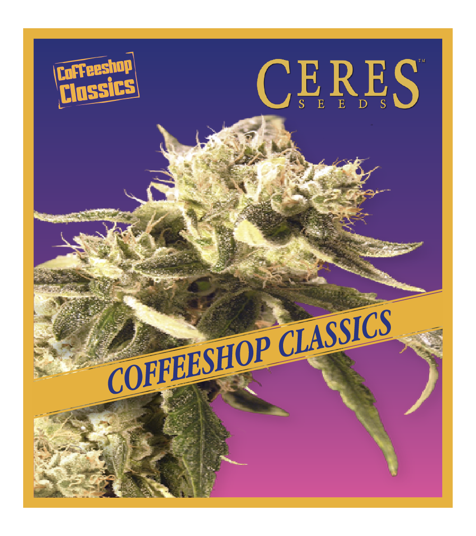 Easy Rider - Auto-Flowering Cannabis Seeds - Ceres Seeds Amsterdam
