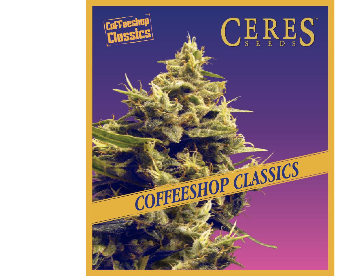 Hollands Hope - Feminized Cannabis Seeds - Coffeeshop Classics - Ceres Seeds Amsterdam