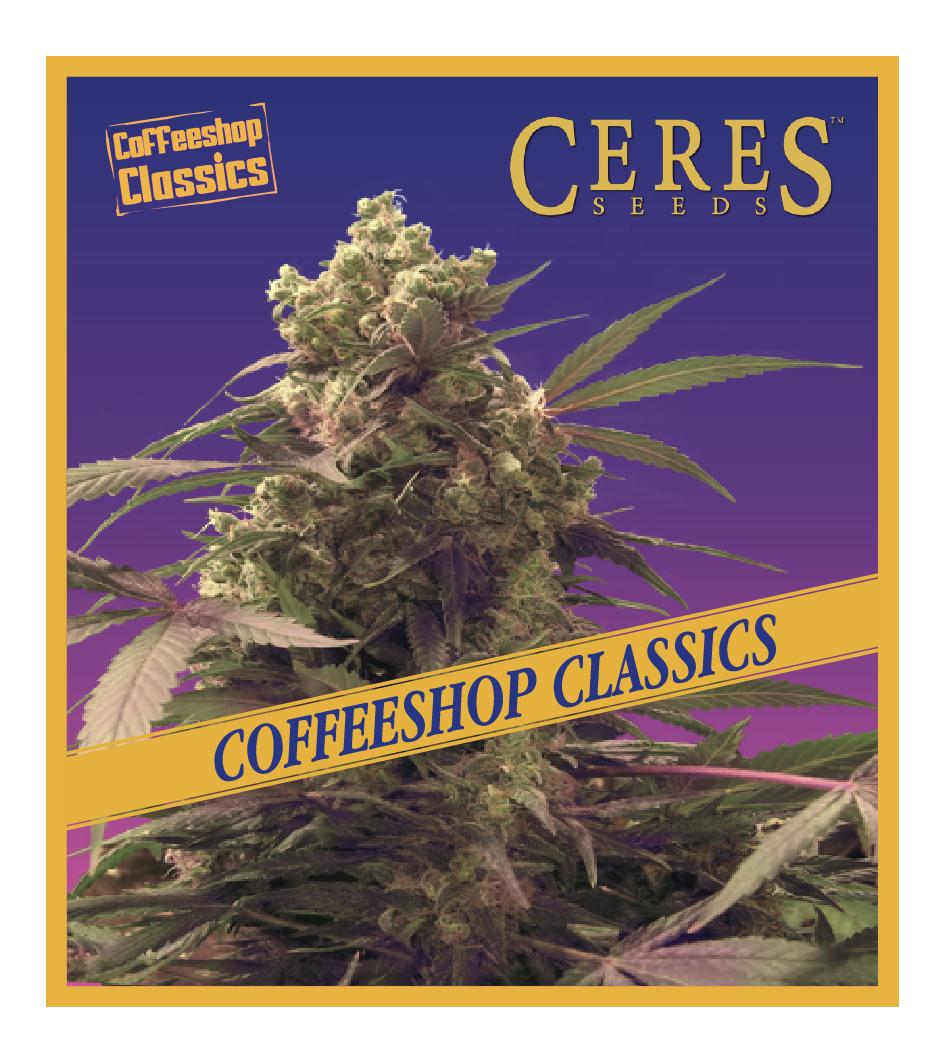 Purple - Feminized Cannabis Seeds - Coffeeshop Classics - Ceres Seeds Amsterdam