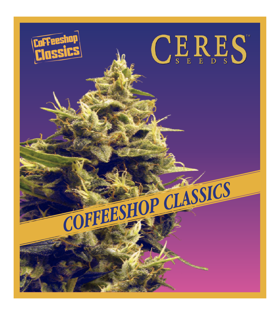 Hollands Hope - Cannabis Seeds - Coffeeshop Classics - Ceres Seeds Amsterdam