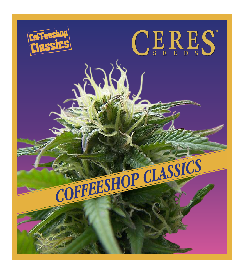 Super Automatic Haze - Auto-Flowering Cannabis Seeds - Ceres Seeds Amsterdam