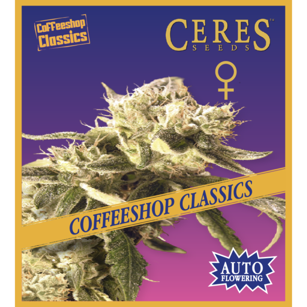 Ceres Kush - Regular seeds, Ceres Skunk - Regular seeds, Fruity Thai - Regular seeds, Lemonesia - Regular seeds, White Indica - Regular seeds, Hollands hope, Orange bud, Purple, Skunk Haze, White widow