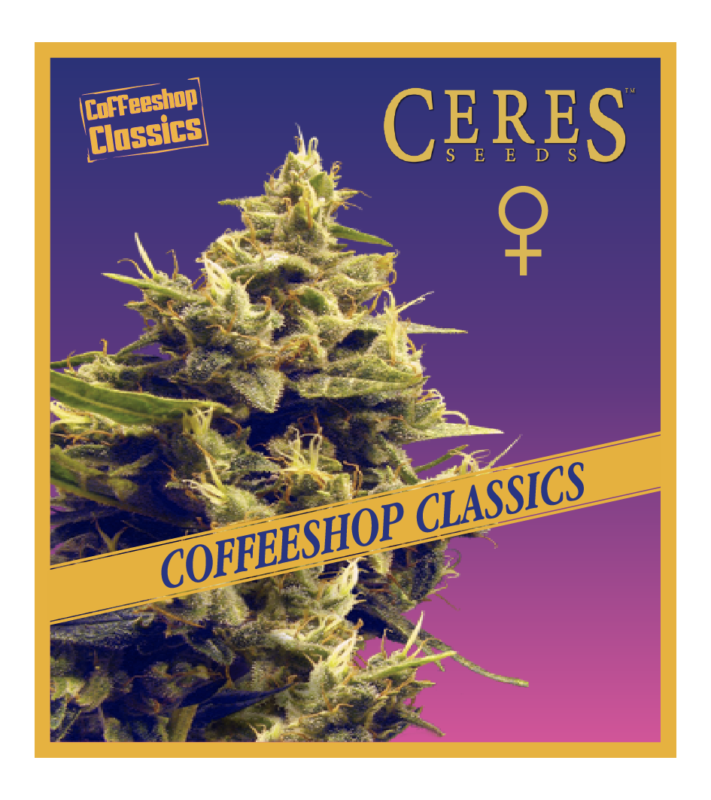 White panther - Regular seeds, Fruity Thai, Northern Lights - Regular seeds, Ceres regular seeds mix - Regular seeds, Auto-flowering seeds mix, Auto-lemonesia, Easy rider,