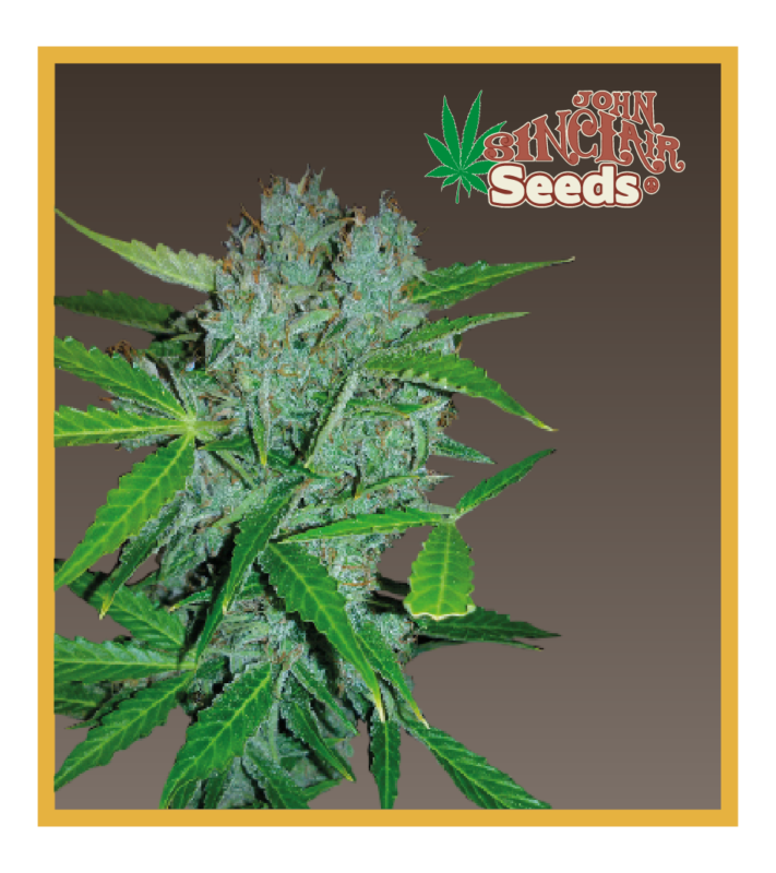 Super automatic haze, Super automatic kush, Super automatic skunk, White panther - Regular seeds, Fruity Thai, Northern Lights - Regular seeds, Ceres regular seeds mix - Regular seeds,