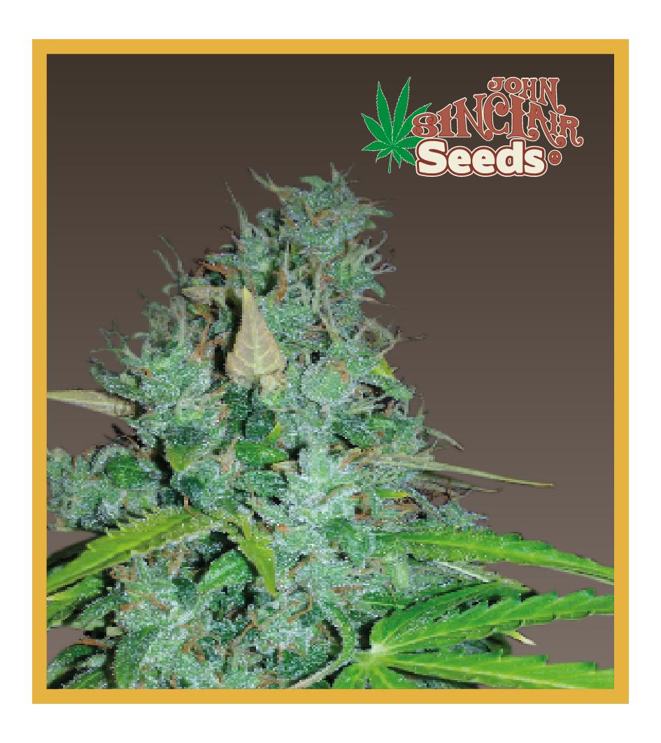 MCM - Auto-Flowering Cannabis Seeds - John Sinclair Seeds Amsterdam