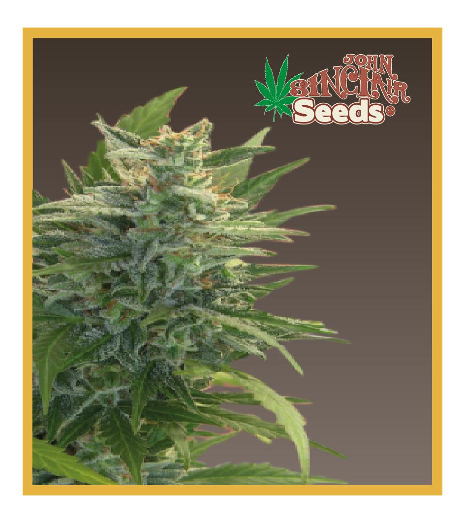 Love Energies - Cannabis Seeds - John Sinclair Seeds Amsterdam