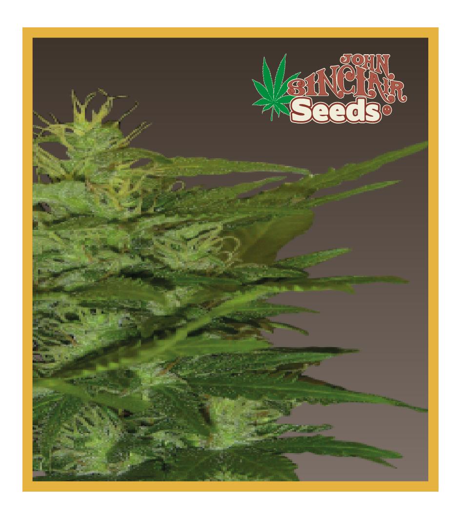 Zenta - Cannabis Seeds - John Sinclair Seeds Amsterdam