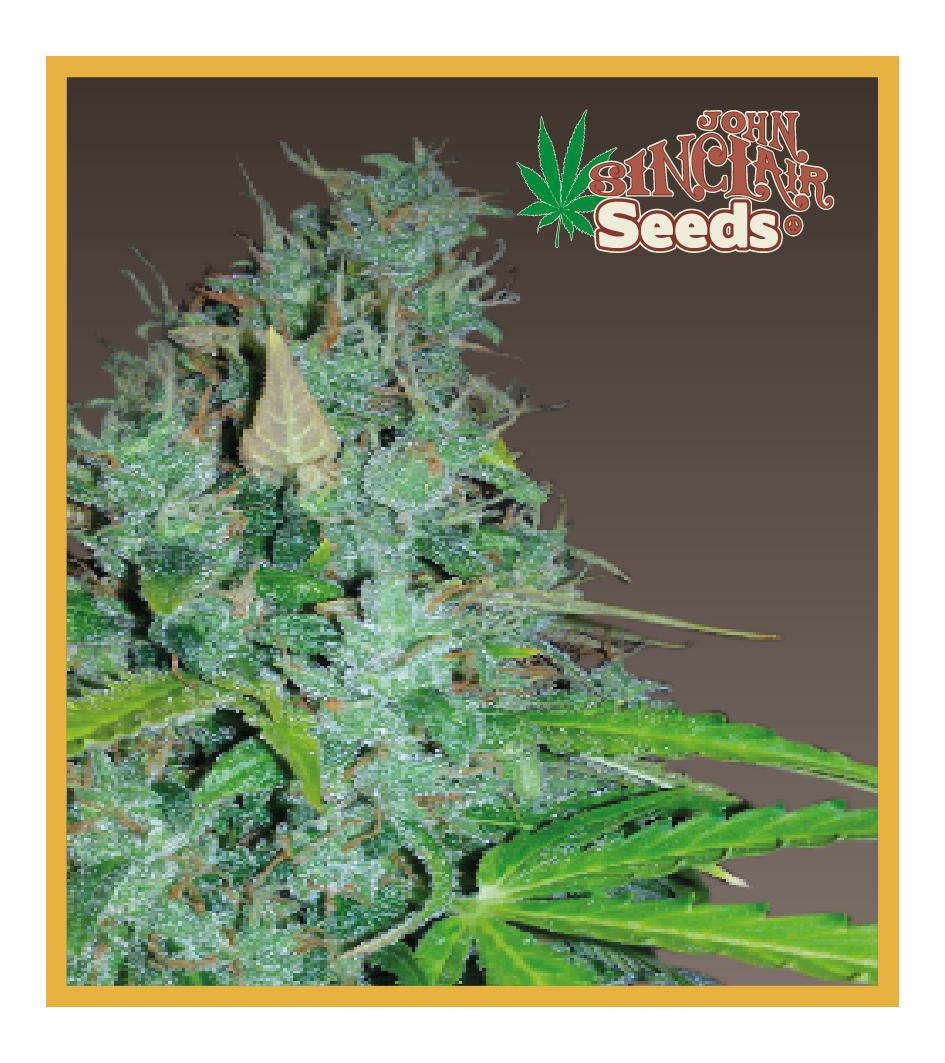 MCM - Auto-Flowering Cannabis Seeds - John Sinclair Seeds