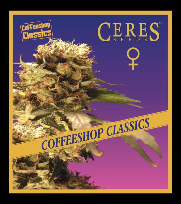 Orange Bud- Feminized Cannabis Seeds