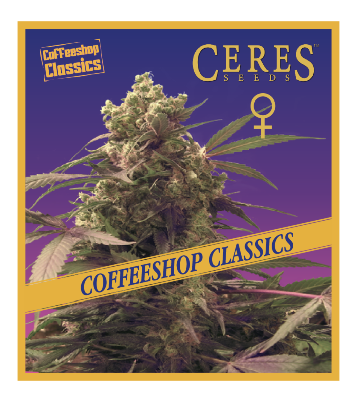 White panther - feminized seeds, Fruity Thai, Northern Lights - feminized seeds, Ceres regular seeds mix - feminized seeds, Auto-flowering seeds mix, Auto-lemonesia, Easy rider,