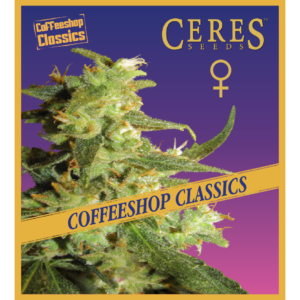 Amsterdam - Regular seeds, Fruity Thai, Trans love energies - Regular seeds, Viper- Regular seeds, White Panther - Regular seeds, Zenta - Regular seeds, Hollands hope, Orange bud, Purple, Skunk Haze, White widow