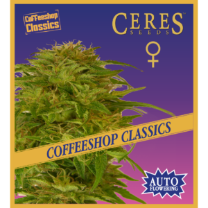 Ceres Kush- feminized seeds, Ceres Skunk - feminized seeds, Fruity Thai - feminized seeds, Lemonesia - feminized seeds, White Indica - feminized seeds, Hollands hope, Orange bud, Purple, Skunk Haze, White widow