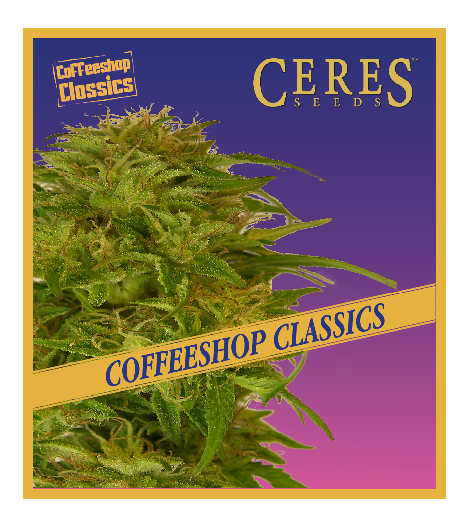 Super Automatic Kush - Auto-Flowering Cannabis Seeds - Ceres Seeds Amsterdam