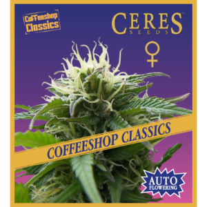 Ceres Seeds Super Automatic Haze