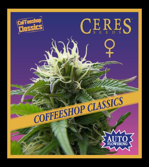 Super Automatic Haze - Auto-flowering Seeds, Feminized Cannabis Seeds
