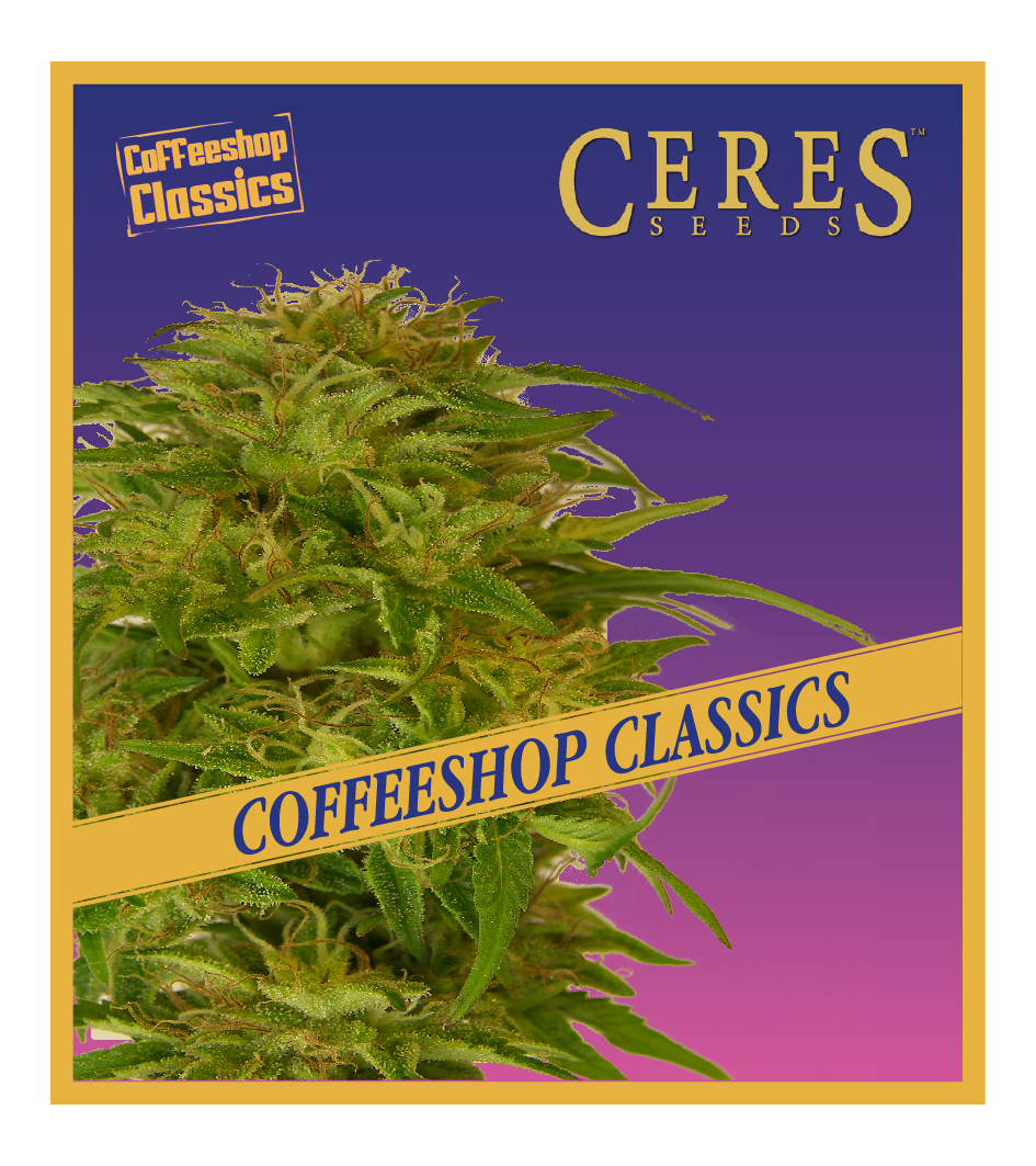 Super Automatic Kush - Ceres Seeds Amsterdam