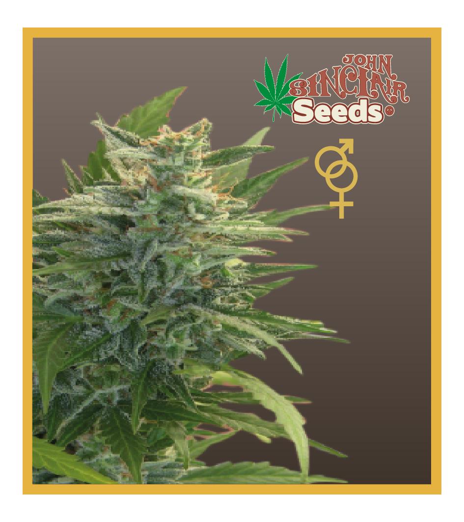 Ceres Kush- feminized seeds, Ceres Skunk - feminized seeds, Fruity Thai - feminized seeds, Lemonesia - feminized seeds, White Indica - feminized seeds,Hollands hope, Orange bud, Purple, Skunk Haze, White widow