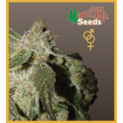 Amsterdam - Regular seeds, Fruity Thai, Trans love energies - Regular seeds, Viper- Regular seeds, White Panther - Regular seeds, Zenta - Regular seeds, Super automatic haze, Super automatic kush, Super automatic skunk