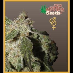 White Panther - Regular Cannabis Seeds - John Sinclair Seeds
