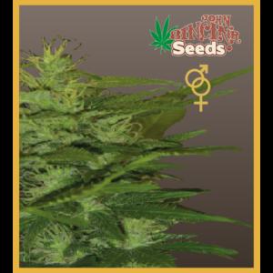 Zenta - Regular Cannabis Seeds - John Sinclair Seeds