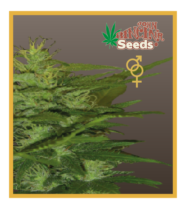 Amsterdam - Regular seeds, Fruity Thai, Trans love energies - Regular seeds, Viper- Regular seeds, White Panther - Regular seeds, Zenta - Regular seeds,Auto-flowering seeds mix, Auto-lemonesia, Easy rider,