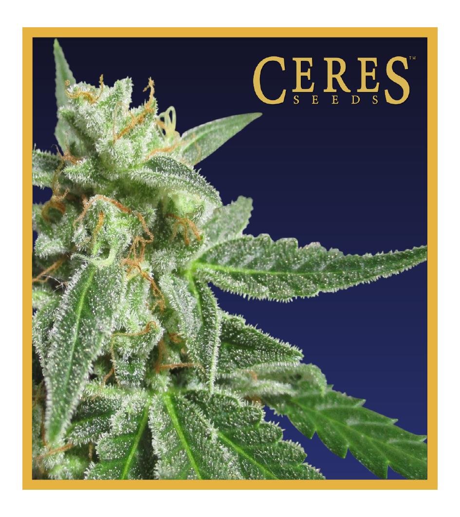 Fruity Thai - Cannabis Seeds - Ceres Seeds Amsterdam
