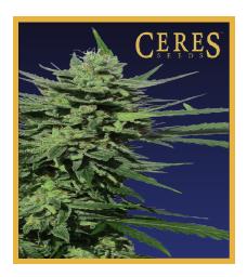 Lemonesia - Cannabis Seeds - Ceres Seeds Amsterdam