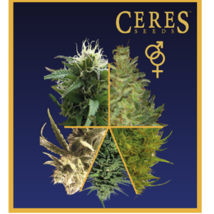 Ceres Seeds Mix Regular