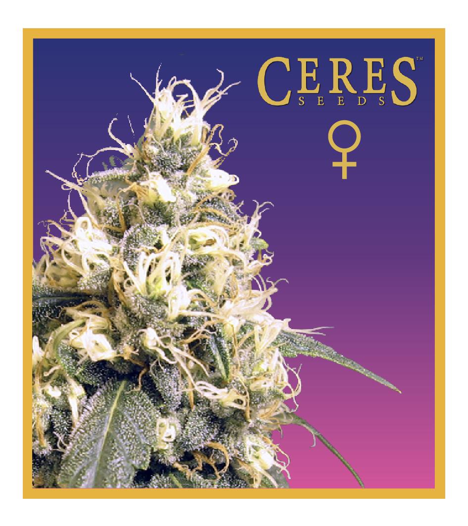 Ceres Skunk - Feminized Cannabis Seeds - Ceres Seeds Amsterdam