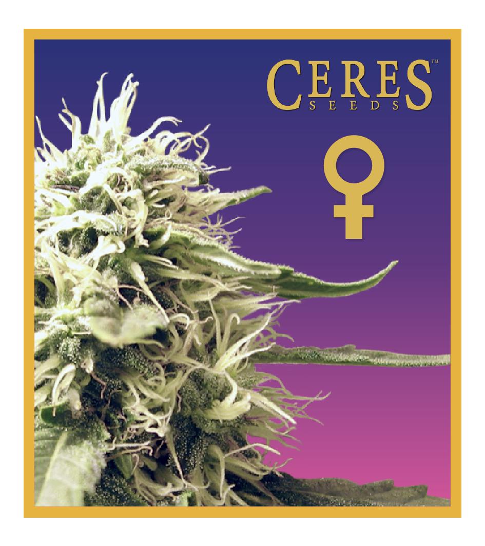 Ceres Kush -Feminized Cannabis Seeds