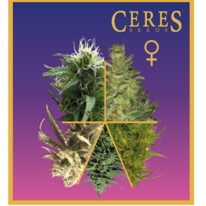 Ceres Seeds Feminized Mix