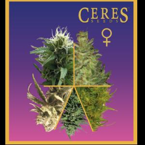 Feminized Cannabis Seeds Mix - Ceres Seeds Amsterdam