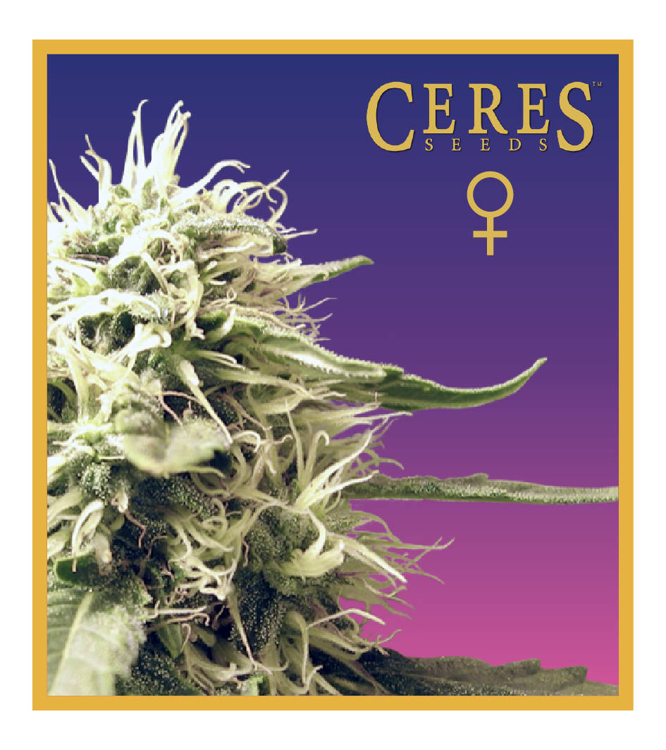 Ceres Skunk- feminized seeds, Ceres Skunk - feminized seeds, Fruity Thai - feminized seeds, Lemonesia - feminized seeds, White Indica - feminized seeds, Super automatic haze, Super automatic kush, Super automatic skunk