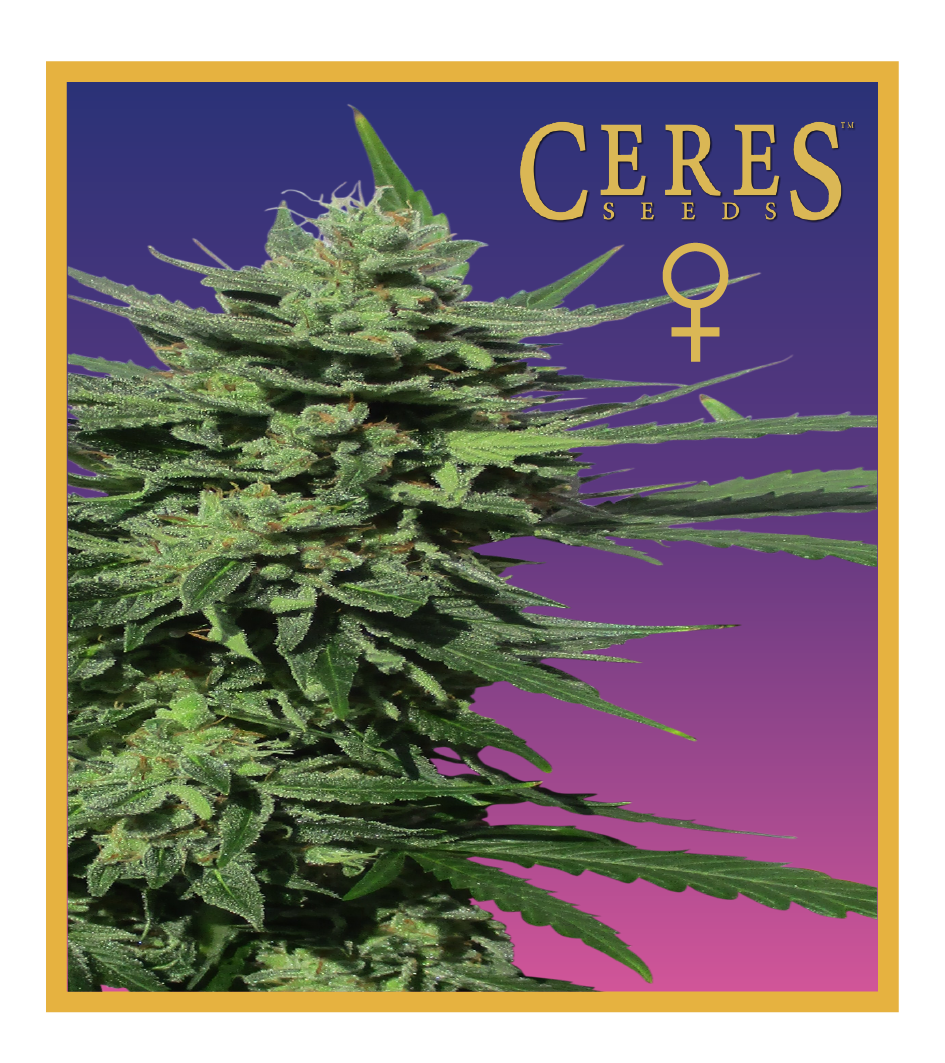 White panther - feminized seeds, Fruity Thai, Northern Lights - feminized seeds, Ceres regular seeds mix - feminized seeds, Auto-flowering seeds mix, Auto-lemonesia, Easy rider,