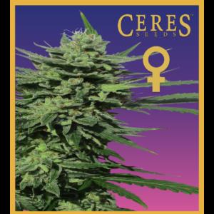 Auto-flowering seeds mix, Auto-lemonesia, Easy rider, Ceres Kush- feminized seeds, Ceres Skunk - feminized seeds, Fruity Thai - feminized seeds, Lemonesia - feminized seeds, White Indica - feminized seeds,