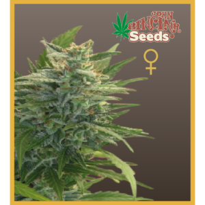 Trans Love Energies feminized seeds