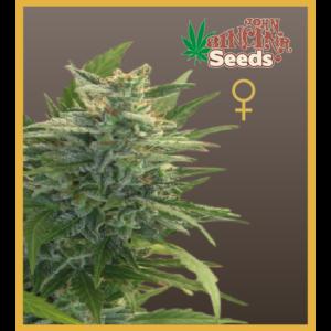 Trans Love Energies - Feminized Cannabis Seeds - John Sinclair Seeds