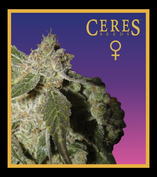 Ceres Kush- feminized seeds, Ceres Skunk - feminized seeds, Fruity Thai - feminized seeds, Lemonesia - feminized seeds, White Indica - feminized seeds,Auto-flowering seeds mix, Auto-lemonesia, Easy rider,