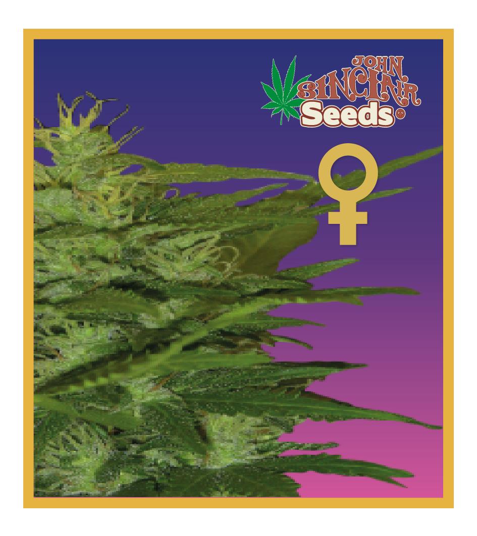 Zenta - Feminized Cannabis Seeds - John Sinclari Seeds